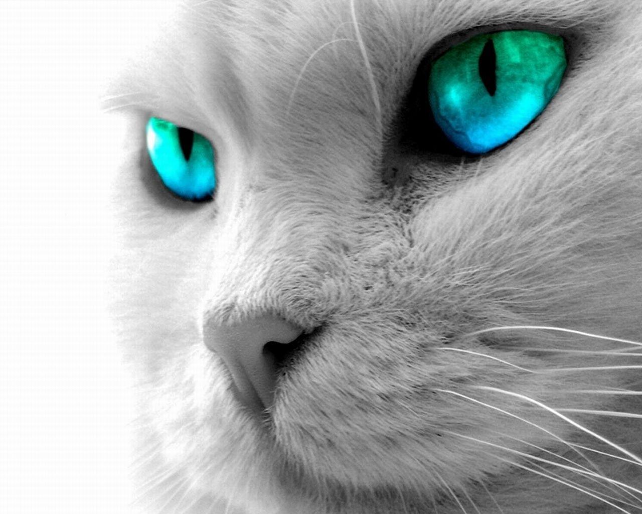 20 правил кошки